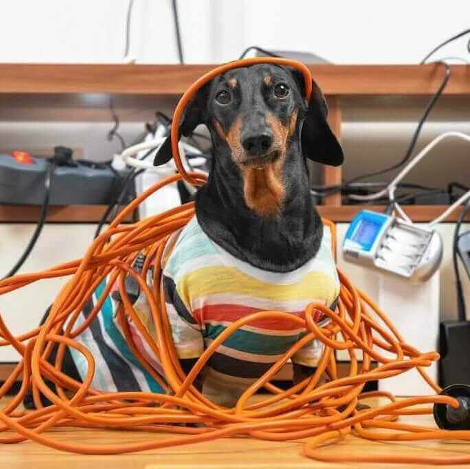 dog tangled up in cables