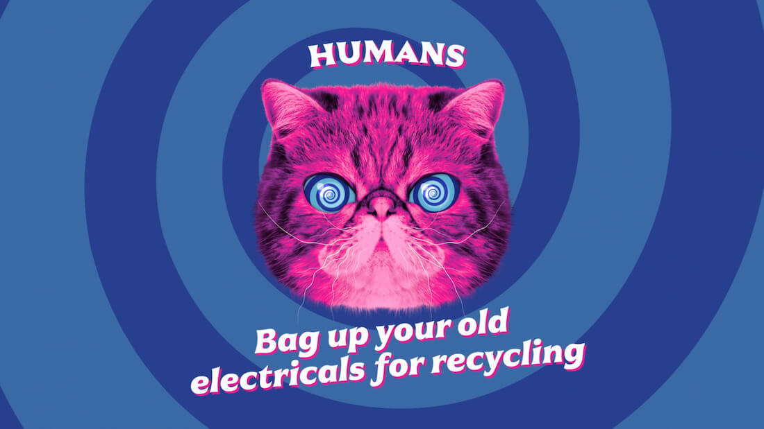 Hypnocat says bag up your electricals for recycling